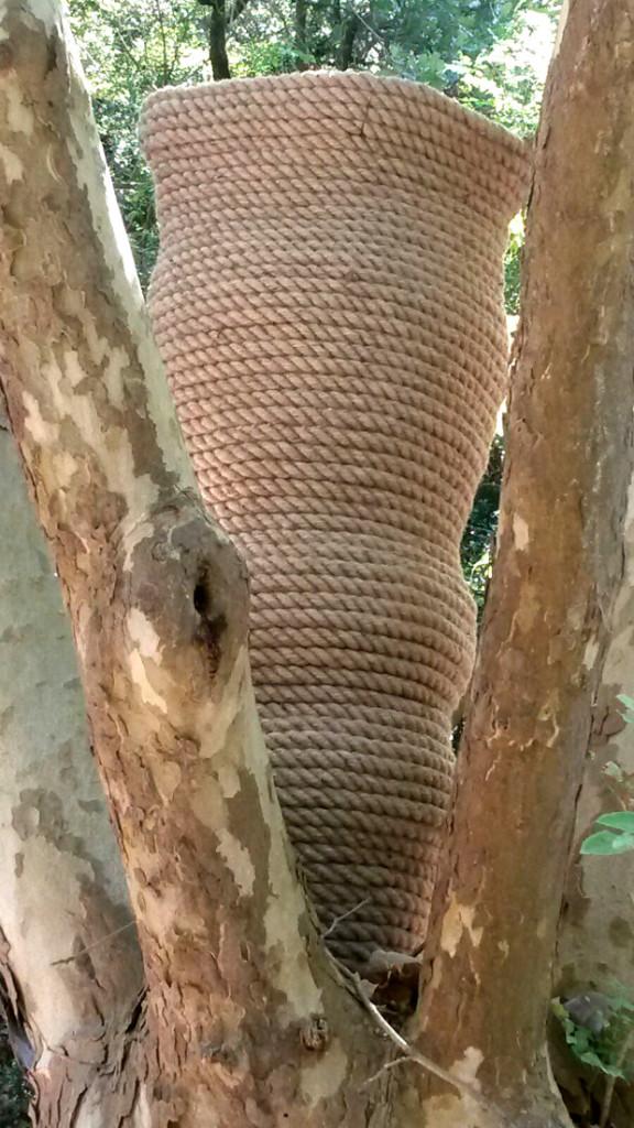 cecilia de paolis